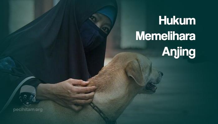 Anjing najis dan hukum memelihara anjing
