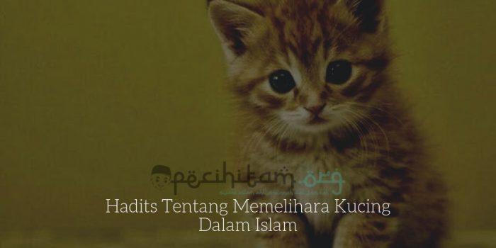 Hadits Tentang Memelihara Kucing Dalam Islam Pecihitam Org