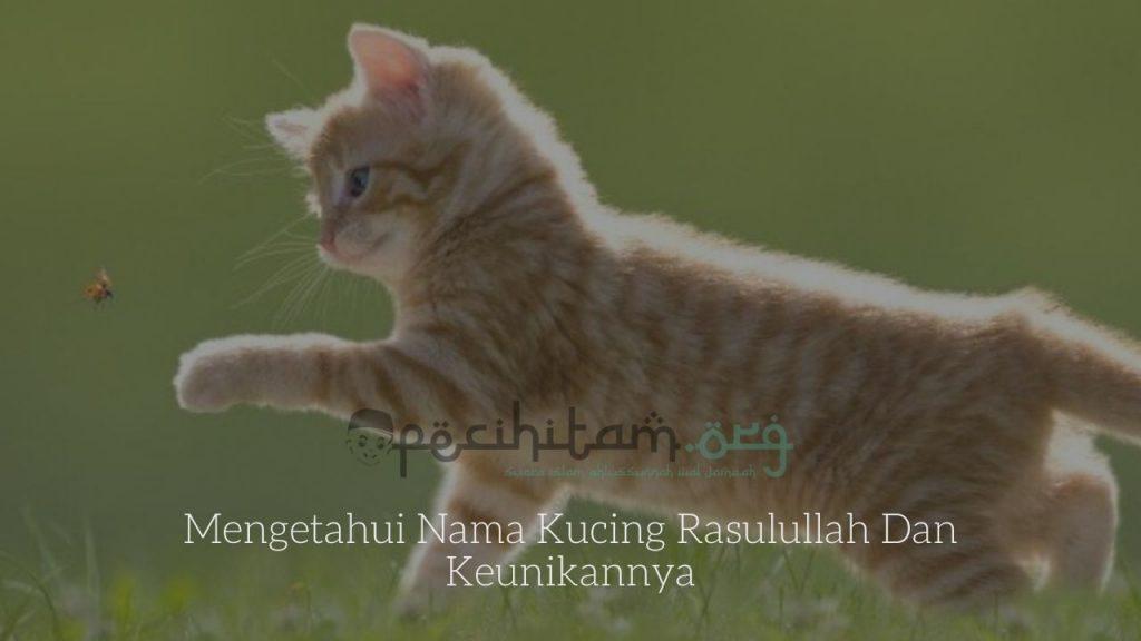 Mengetahui Nama Kucing Rasulullah Dan Keunikannya Pecihitam Org