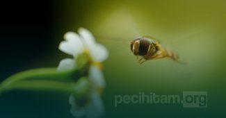 Ternyata Ada Banyak Pelajaran dari Lebah yang Dapat Kita Renungi