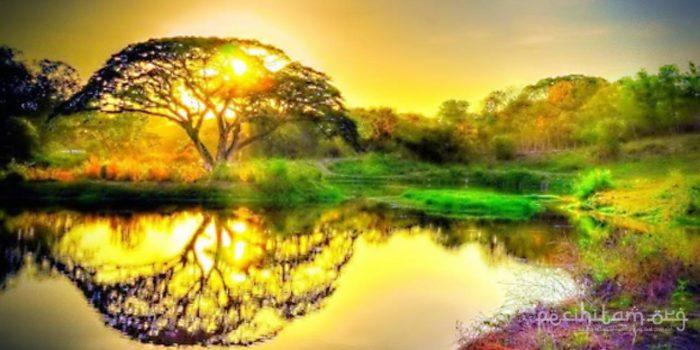 pohon sidratul muntaha