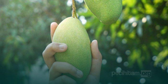 Mengambil Buah yang Jatuh dari Pohon Milik Orang Lain