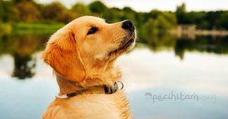 sifat anjing yang perlu ditiru
