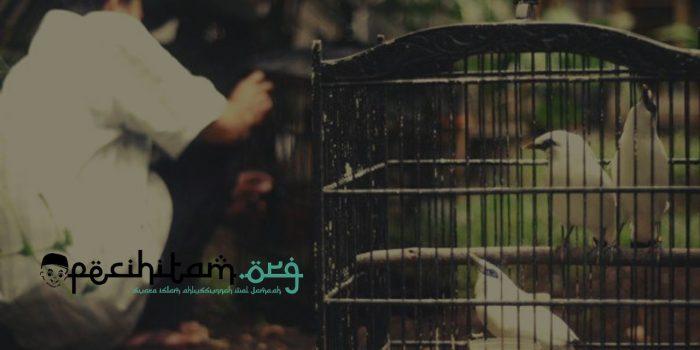 Hukum Memelihara Burung dalam Islam Itu Tergantung Pada Pemeliharanya, Begini Penjelasannya