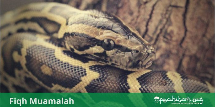 hukum menjual ular piton