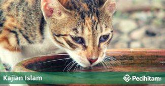 Air Bekas Jilatan Kucing